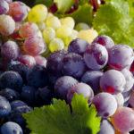 Врачи рассказали, кому стоит отказаться от употребления винограда