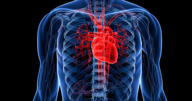 Нарушения и развитие сердечно-сосудистой патологии