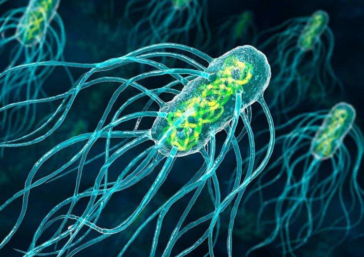 Ученые нашли новые очаги размножения коронавируса в теле человека