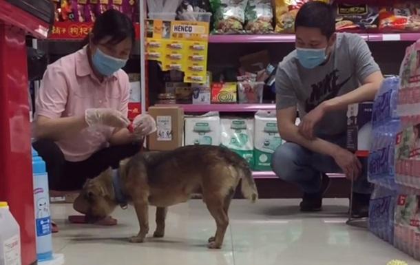 """""""Хатико эры Covid"""": собака три месяца прождала под больницей своего умершего хозяина"""
