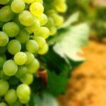 Медики рассказали, что происходит с организмом после употребления винограда, и кому не стоит его есть