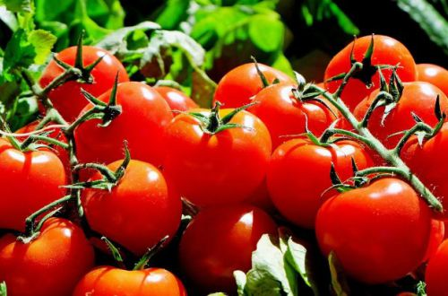 Могут вызвать зуд и сыпь: кому нельзя есть помидоры