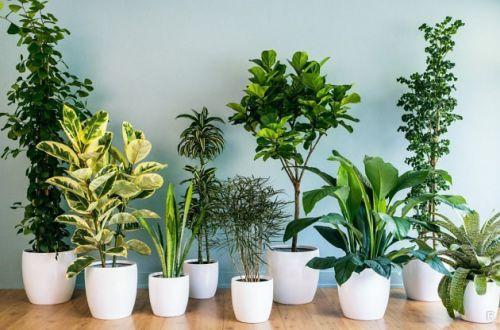 Какие комнатные растения могут сильно навредить здоровью
