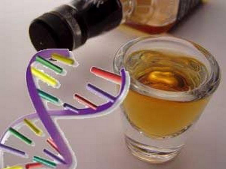 Стало известно, заложен ли в генетике человека алкоголизм