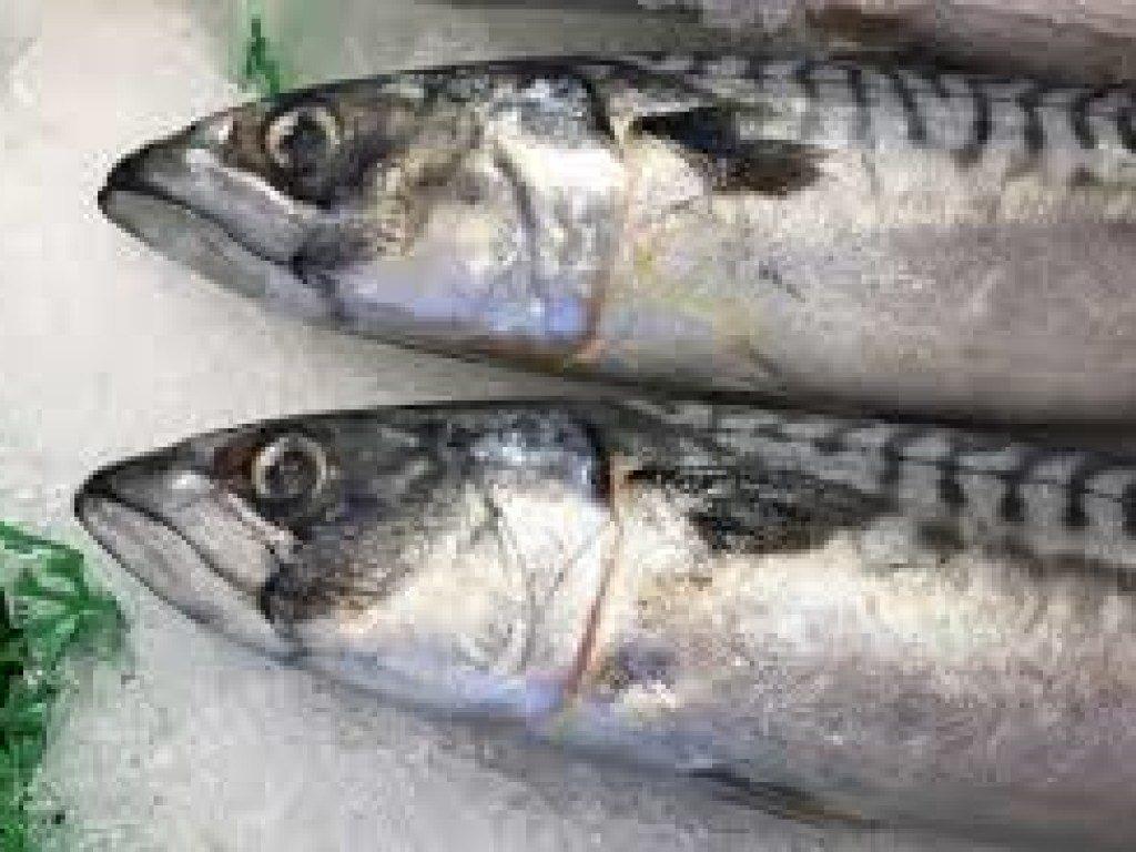 Медики развенчали популярный миф о вреде рыбы