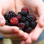 Ежевика, в чем плюсы и минусы для организма этого вкуснейшего сезонного фрукта