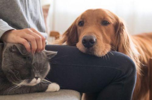 Врачи ответили могут ли коты и собаки подцепить COVID-19