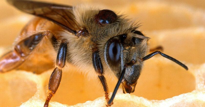 Сезон пикников: как не стать жертвой клещей, комаров и пчел
