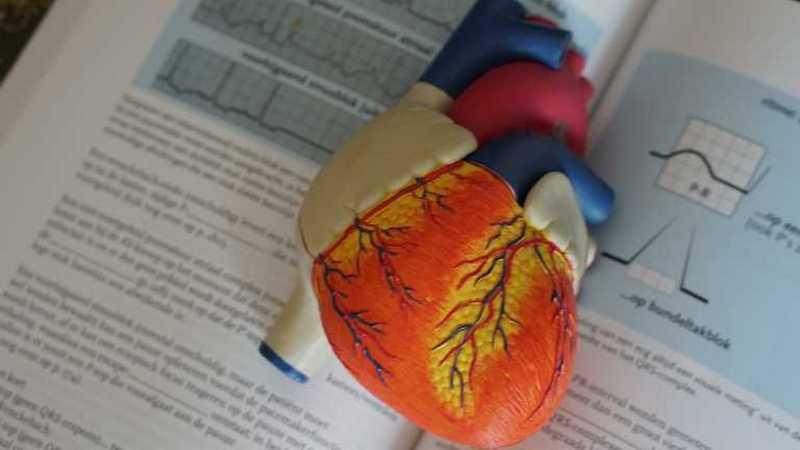 Какие продукты полезны для сердечно-сосудистой системы